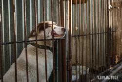 Клипарт. Сургут, вольер, собака в клетке, собачий питомник
