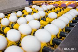 Пасхальная экскурсия на хлебокомбинат и птицефабрику «СИТНО». Магнитогорск, продукты, конвейер, яйца, птицефабрика, еда