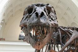 Открытая лицензия 15.07.2015. Наука., археология, наука, динозавр