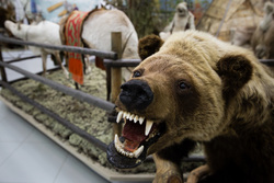 Визит сирийской делегации из провинции Хомс в город Сургут, медведь, медвежья пасть, чучело медведя