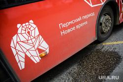 Новые автобусы. Пермь, медведь, автобус, пермский период