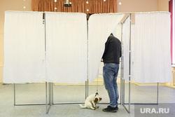 Пес на избирательном участке. Екатеринбург, собака, пес, кабинки для голосования, избирательный участок, голосование