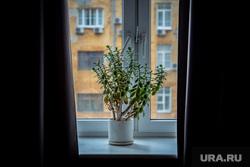 Владелец компании по производству эко-сумок «Экопрост» Иван Рыбников. Екатеринбург, окно, растение в горшке