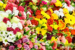 Цветы. Челябинск, розы, цветы, герберы, букеты цветов