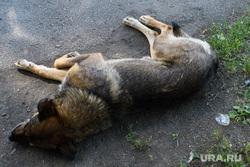 Виды Железногорска, Красноярский край, дворняга, бродячая собака