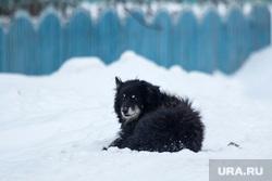 Село Узян – озеро Якты-Куль. Башкортостан, снег, собака, зима, забор