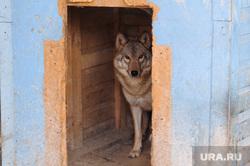 Приют для диких животных и птиц Карена Даллакяна