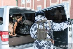 Служебная собака.  Курган, служебная собака, кинолог, тренировочные учения