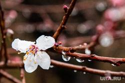 Виды Сочи, сочи, весна, цветущее дерево
