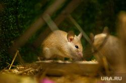 Новая экспозиция мелких зверей с разных частей света в Екатеринбургском зоопарке, зоопарк, грызун, экспозиция мелких зверей