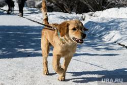 Сквер у памятника Якову Свердлову. Екатеринбург, выгул собак, домашние животные, золотой ретривер