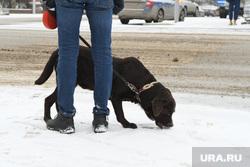 Виды города. Екатеринбург, собака, зима, ест снег