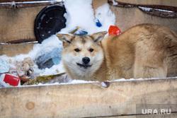 Село Узян – озеро Якты-Куль. Башкортостан, собака, зима, голод, еда, помойка