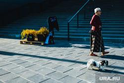 Виды города. Екатеринбург, пенсионерка, пенсионер, собака, прогулка с собакой, лестница