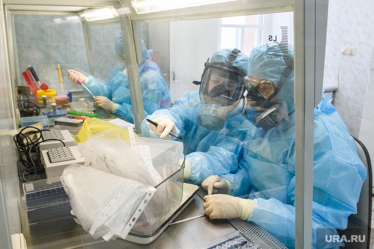 Исследование анализов на коронавирус в лаборатории ЕКДЦ. Екатеринбург