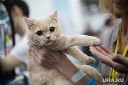Выставка кошек. Пермь, выставка кошек
