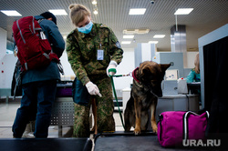 Ситуация в аэропорту Кольцово в связи с эпидемией коронавируса в Китае. Екатеринбург, аэропорт, кольцово, кинологическая служба, проверка багажа