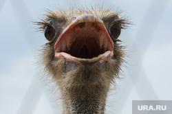Животные. Челябинск, страус