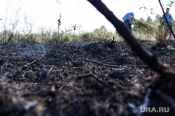 Рефтинская ГРЭС: адресники, место аварии, гарь, лесной пожар, пал, торф, выжженая земля
