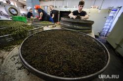 Производство напитка на основе иван-чая. Свердловская область, Ревда, сухая трава, иван-чай