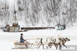 День оленевода в селе Аксарка, ЯНАО, гонки на оленях