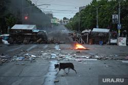 Последствия боевых действий в Мариуполе. Украина, собака, баррикады, дворняга, бездомный пес, мариуполь, постапокалипсис, бедствие, разруха