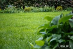 Ботанический сад УрФУ. Екатеринбург, трава, лето, газон, зелень