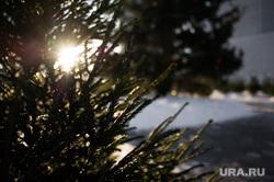 Виды Екатеринбурга, елка, новогодняя елка, новый год