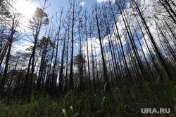 Белый Яр после пожара. Курган , сгоревший лес, лесной пожар, последствия пожара