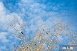 Виды города. Тобольск, облака, небо, природа, весна, птицы на деревьях