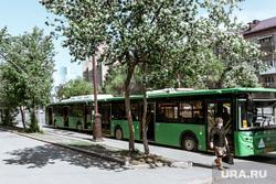 Виды Тюмени. Тюмень , яблоня цветет, прохожий, человек в маске, автобус