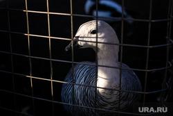 Московский зоопарк. Москва, вольер, клетка, животные, птица, утки