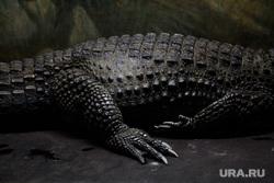 Акватеррариум. Пермь, крокодил, террариум, рептилии