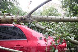Упавшие деревья после урагана. Тюмень, ураган, штормовое предупреждение, шторм, упавшее дерево, дерево упало на машину