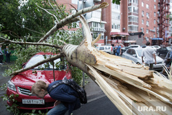 Упавшие деревья после урагана. Тюмень, ураган, штормовое предупреждение, пень, сломанное дерево, шторм, упавшее дерево, дерево упало на машину