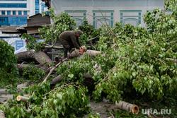 Последствия урагана в Екатеринбурге, улица куйбышева, распил дерева, екатеринбург , ураган, циклон, последствия урагана, устранение последствий, дерево