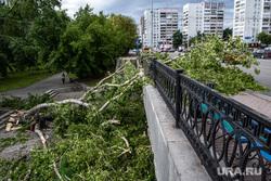 Последствия урагана в Екатеринбурге, сломанное дерево, улица карла либкнехта, екатеринбург , циклон, забор, последствия урагана, остановка тюз