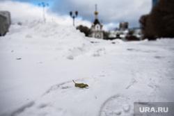 Виды города. Екатеринбург, сугроб, снег, зима, часовня святой екатерины