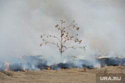 Лесные пожары. Учения МЧС. Челябинск, пожар, лес, трава, дерево, огонь