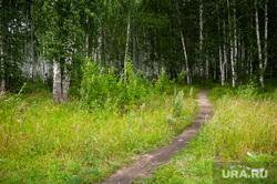 Объезд парковых зон Екатеринбурга в рамках рабочей группы по благоустройству, академический, лес, лето, тропа, березовая роща