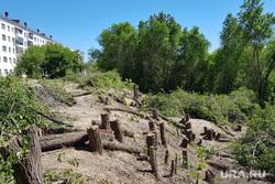 Вырубка деревьев на набережной в Центральном парке культуры и отдыха. Курган, цпкио, вырубка кустов, зеленые листья, пеньки, вырубка деревьев