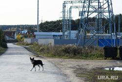 Виды Верхней Сысерти. Свердловская область, собака, деревня, электроподстанция