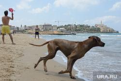 Виды Тель-Авива, Ашдода, Иерусалима. Израиль, собака, море, выгул собак, курорт, купание, развлечение, пляж, отдых, отпуск, тель-авив, старый яффо, туризм