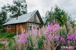 Природа ХМАО. Сургут, деревня, природа, дом деревянный, иван-чай, пейзаж