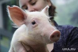 Зоопарк. Пермь, свинья, скот, поросенок, скотоводство, животноводство