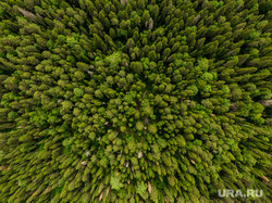 Виды с квадрокоптера. Екатеринбург, деревья, лес