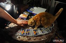 Гадание на ВИП. Челябинск, кот, карты, магия, котик, гадание, колдовство, таро