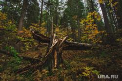 Природа ХМАО. Сургут, лес, природа, пейзаж