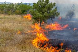 Клипарт depositphotos.com, пламя, дым в лесу, лесные пожары, огонь, пожар, тушение пожара, природа, экология