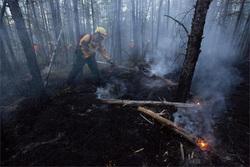 Открытая лицензия на 29.07.2015. Лесной пожар, пожар, лес
